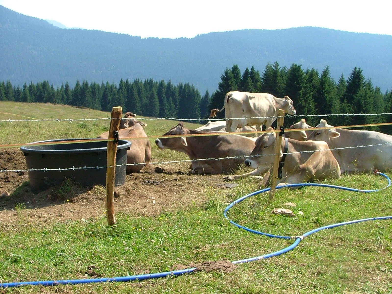 Abbattere un albero se il contadino si munge la mucca