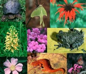 biodiversità argav