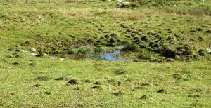 """""""lama"""" dove ristagna l'acqua piovana"""