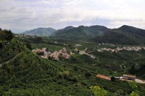 Conegliano-Valdobbiadene-Colline-Prosecco-DOCG