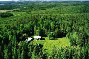 foresta scandinava
