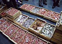 dicono-di-noi_il-pesce-si-compra-via-web-con-i-server-fujitsu-siemens