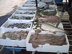 thumb250-700_dettaglio2_pesce