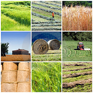 lavoro-voucher-agricoltura-treviso-provincia-crisi