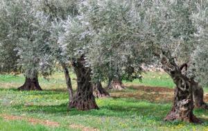 paesaggio olivicolo