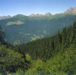 Nasce-in-Trentino-Mountfor-un-centro-di-studio-per-le-foreste-montane_large