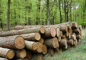 legname foreste