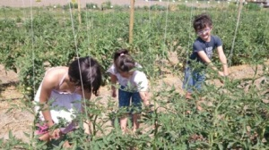 Famiglia raccoglie verdure Ortodidattico