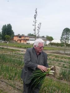 Renato Maggiolo mentre raccoglie cipollotti