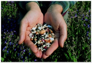 seed-saver