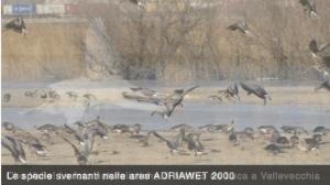 AdriaWet2000