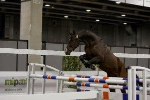 Cavallo da sella italiano_salto in libertà