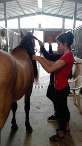 Giulia Caniato mentre prepara i cavalli