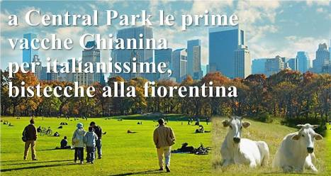 mucche-central-park